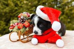 Cachorrinho do Corgi no chapéu de Santa imagem de stock