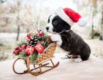 Cachorrinho do Corgi no chapéu de Santa no fundo do inverno imagem de stock royalty free