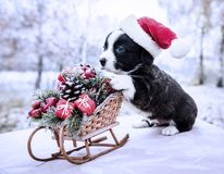 Cachorrinho do Corgi no chapéu de Santa no fundo do inverno imagens de stock