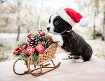 Cachorrinho do Corgi no chapéu de Santa no fundo do inverno fotos de stock royalty free