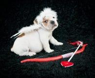 Cachorrinho do cupido Fotografia de Stock