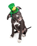 Cachorrinho do dia do St Patricks que inclina a cabeça Fotos de Stock Royalty Free