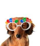 Cachorrinho do feliz aniversario imagem de stock