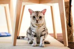 Cachorrinho do gato Imagem de Stock Royalty Free