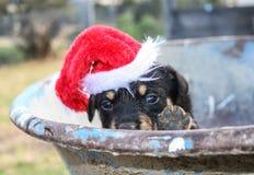 Cachorrinho do Kelpie que veste o chapéu de Santa imagem de stock royalty free