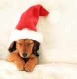 Cachorrinho do Natal Fotografia de Stock