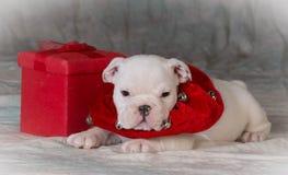 Cachorrinho do Natal Foto de Stock