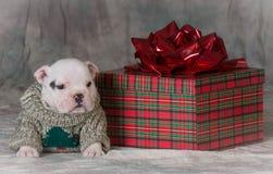 Cachorrinho do Natal Imagens de Stock Royalty Free