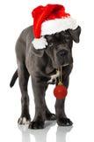 Cachorrinho do Natal Imagem de Stock