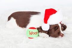 Cachorrinho do Natal que dorme com bola Fotografia de Stock Royalty Free