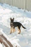 Cachorrinho do pastor alemão fora Foto de Stock