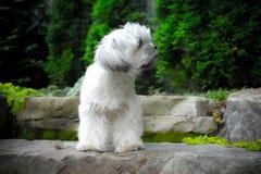 Cachorrinho do perfil Imagens de Stock Royalty Free