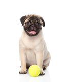 Cachorrinho do Pug com bola de tênis Isolado no fundo branco Imagem de Stock Royalty Free