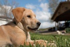 Cachorrinho do sorriso imagem de stock royalty free