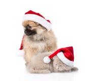 Cachorrinho do spitz do Natal e gatinho escocês nos chapéus de Santa que olham afastado Fotos de Stock