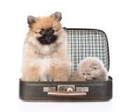Cachorrinho do Spitz e gatinho escocês que sentam-se em um saco Isolado Imagens de Stock Royalty Free