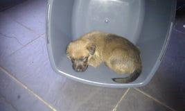 Cachorrinho do terrier irlandês em uma bacia Fotos de Stock