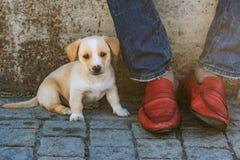 Cachorrinho e as sapatas vermelhas Fotografia de Stock Royalty Free