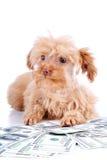 Cachorrinho e dólares decorativos. Fotos de Stock Royalty Free
