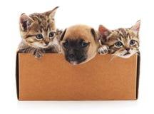 Cachorrinho e dois gatinhos em uma caixa Foto de Stock Royalty Free