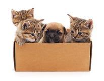 Cachorrinho e gatinhos em uma caixa Foto de Stock Royalty Free