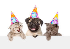 Cachorrinho e gatinhos nos chapéus do aniversário que espreitam da placa vazia de trás Isolado no branco foto de stock royalty free
