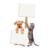 Cachorrinho e Kitten Holding Blank Signs imagens de stock