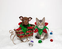 Cachorrinho e Kitten Holiday Scene Fotografia de Stock Royalty Free