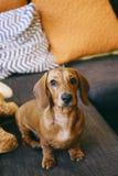 Cachorrinho em casa Fotografia de Stock Royalty Free