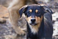 Cachorrinho em um abrigo para cães desabrigados Imagens de Stock Royalty Free