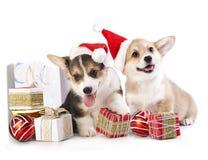 Cachorrinho em um chapéu de Santa Claus imagem de stock royalty free