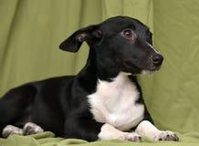 Cachorrinho em um fundo verde Foto de Stock