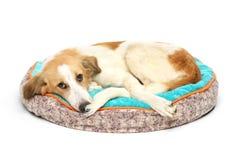 Cachorrinho em uma maca morna foto de stock royalty free