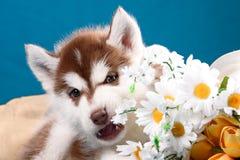 Cachorrinho engraçado com um ramalhete das flores foto de stock royalty free