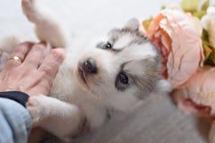 Cachorrinho engraçado com um ramalhete das flores imagens de stock