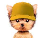 Cachorrinho engraçado no chapéu de basebol isolado no branco Imagens de Stock Royalty Free