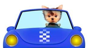 Cachorrinho engraçado que senta-se no cabriolet Fotos de Stock Royalty Free
