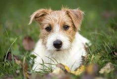 Cachorrinho feliz bonito do cão de estimação que encontra-se na grama foto de stock royalty free