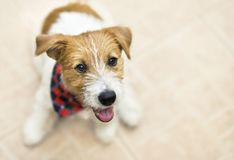 Cachorrinho feliz bonito do cão de estimação fotografia de stock