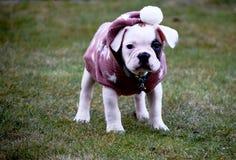 Cachorrinho frio com uma mola de espera da camiseta a chegar fotografia de stock royalty free