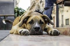 Cachorrinho furado fotografia de stock