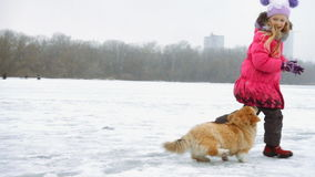 Cachorrinho macio do corgi engraçado que anda com menina fora filme