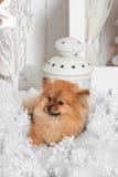 Cachorrinho maravilhoso que encontra-se na neve e que olha à esquerda no estúdio Foto de Stock