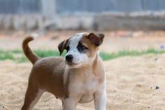 Cachorrinho na areia, cão bonito, tendo o recreio fotografia de stock