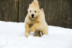 Cachorrinho na neve Foto de Stock Royalty Free