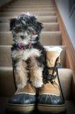 Cachorrinho nas botas fotografia de stock