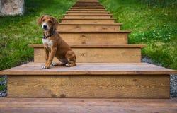 Cachorrinho nas escadas Imagens de Stock Royalty Free