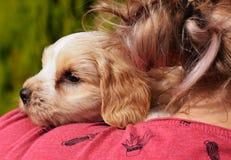 Cachorrinho no cabelo Fotografia de Stock Royalty Free