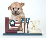 Cachorrinho patriótico Fotos de Stock Royalty Free