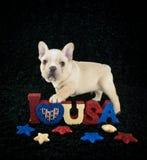 Cachorrinho patriótico Imagem de Stock Royalty Free